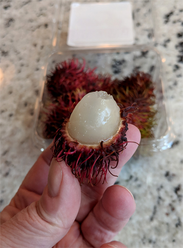 image of a rambutan, a small white grape-like fruit, peeking out of its skin, being held in my hand