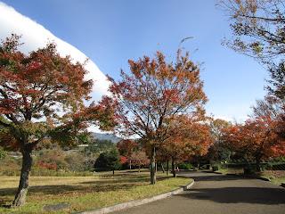 園内紅葉<12.1撮影>ほぼ終了です