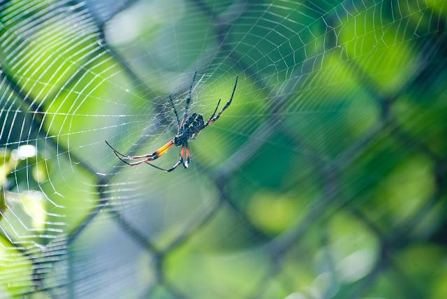 Picadura de araña: Esta guía podría ayudarte