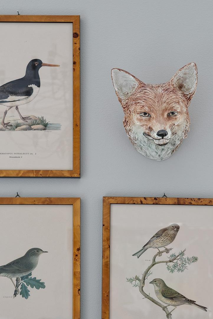 rysunki ptaków,rysunki roślin, lis, lisek