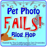 Pet Photo Fails