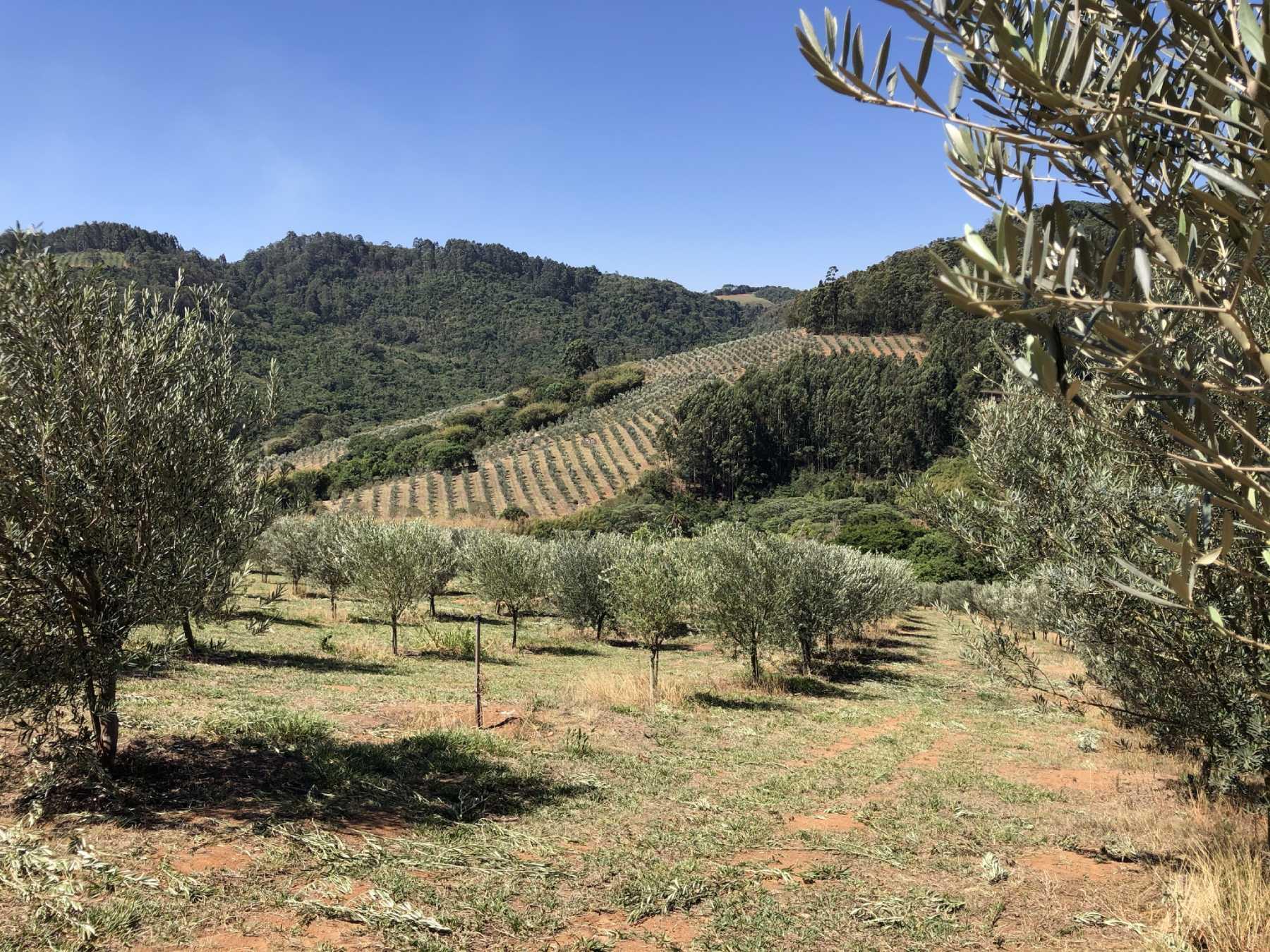Fazenda Irarema