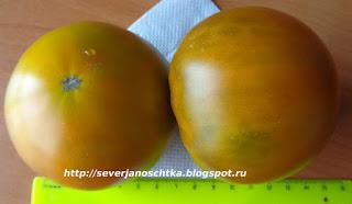 томаты искуситель