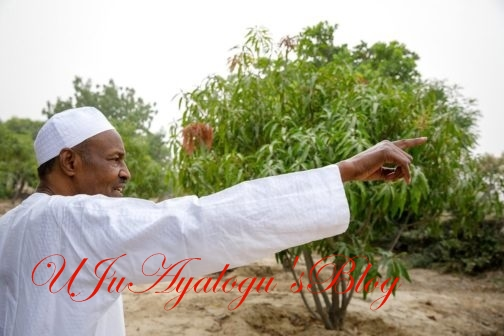 President Buhari Spotted Visiting His Farm and Inspecting His Cattle (Photos)