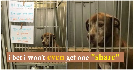 Lonely dog has been waiting in shelter for over 7 years, begs someone to give her a 'second chance'