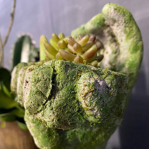 Unique DIY Concrete Succulent Planter