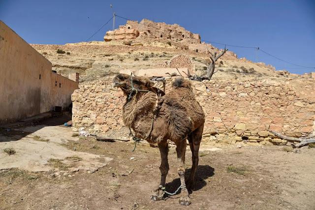 شنيني : من أفضل الأماكن للزيارة في تونس