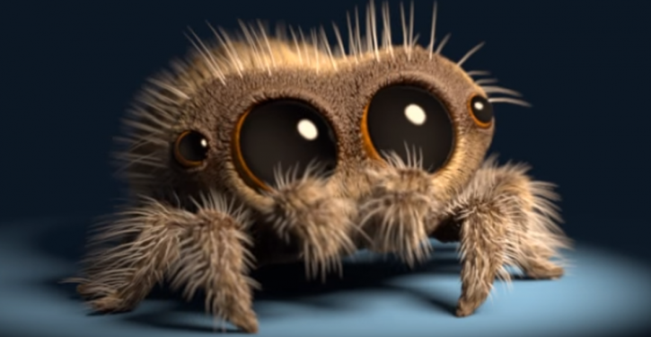 Do Not Kill The Spiders That Live At Home, They Are Very Useful