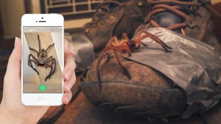 Australia crea una aplicación para identificar a las enormes arañas que allá aparecen