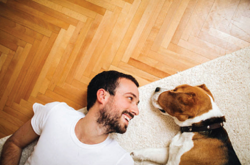 man lying on ground with dog