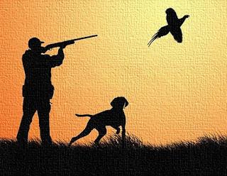Cani da caccia: cerca, ferma e seguita