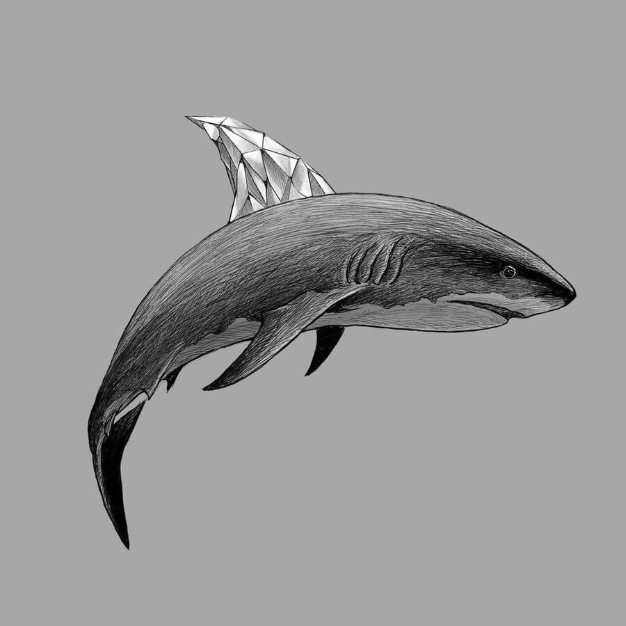 09-Great-white-shark-Kerby-Rosanes-www-designstack-co