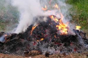 Fakta Bahaya dari Aktivitas Membakar Sampah  Basecamp