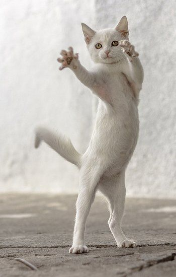 Resultado de imagem para O Gato Malabarista!