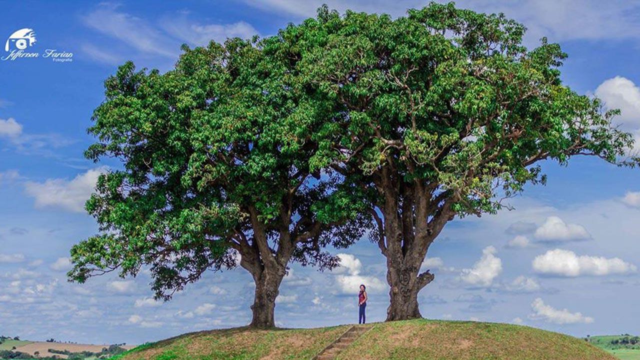 Concessionária nega corte em Árvores Gêmeas de Laranjal Paulista