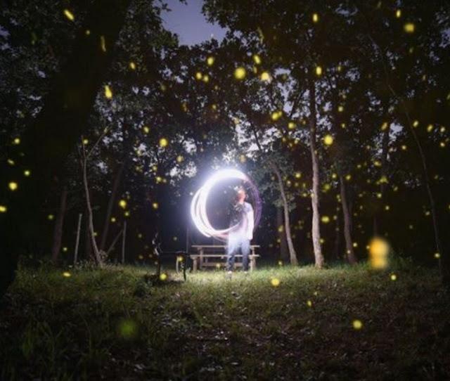 lucciole nel bosco