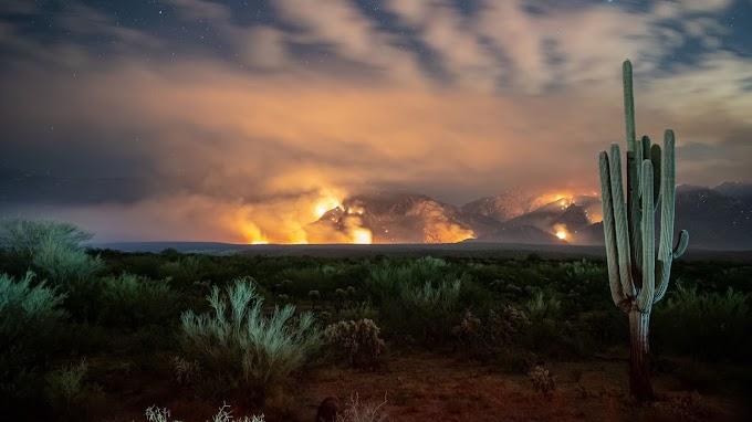 Cactus Pôr do Sol no Deserto