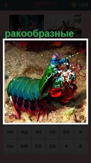 по морскому дну ползают ракообразные