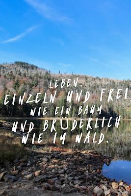Die 50 Besten Zitate Zu Den Themen Wald Und Bäume Waldzitate