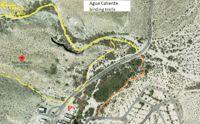 Agua Caliente birding trail map