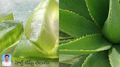 Health Tips Telugu ఔషధ గుణాలు కలిగిన మొక్కలు, ఆకులు, కాషాయాలు, వాటివల్ల కలిగే ఆరోగ్య ప్రయోజనాలు.