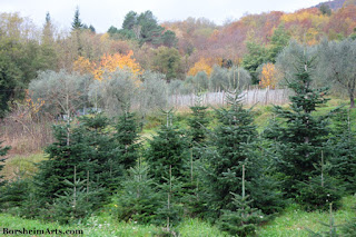 The Good Life Christmas Trees from Castelvecchio in Tuscany