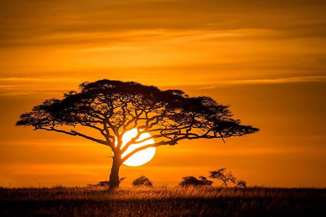 sun set tree animal nature tree wallpaper full hd nature flower wallpaper full hd