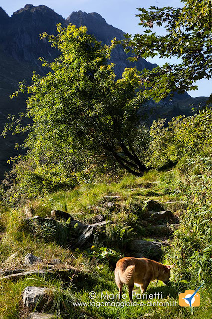 Tratto iniziale di sentiero per l'alpe Selle