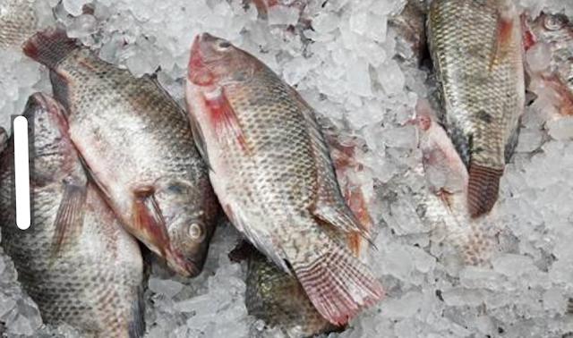 "Para Ahli Menyarankan, Ikan ""Ini"" Jangan Dibeli!! Yuk, Dicatat Demi Kesehatan Keluarga!"