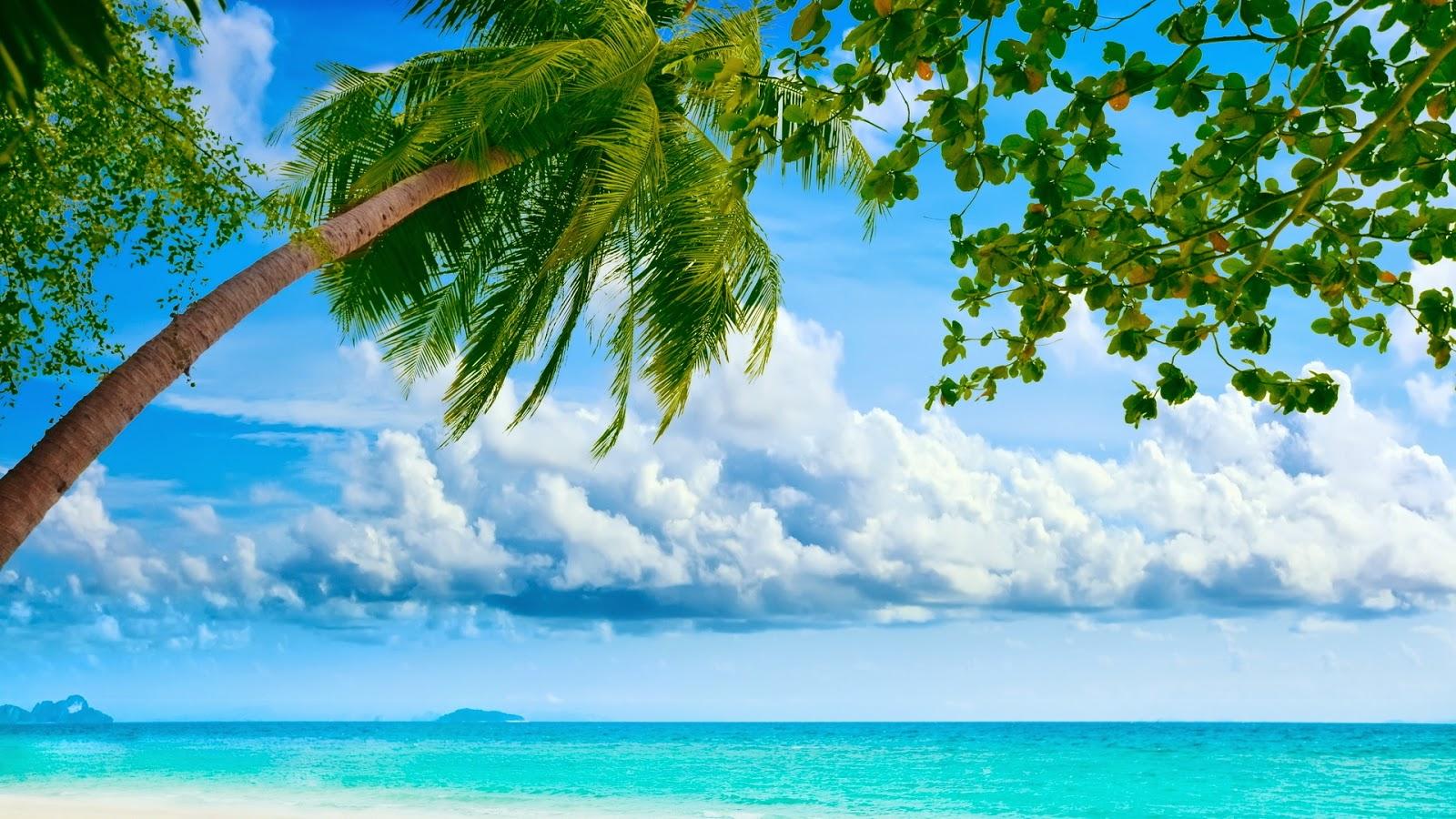 Eiland met palmbomen en blauwe oceaan