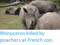 https://sciencythoughts.blogspot.com/2017/03/rhinoceros-killed-by-poachers-at-french.html
