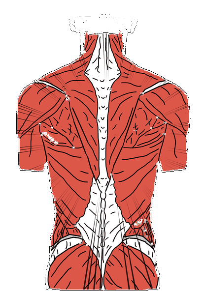 قناة,تلفزيون,علاج,الحياة,التهاب المفاصل,المغنيسيوم,الفضائية,التخلص من الام العضلات,برنامج,علاج الام المفاصل والعضلات,العربية,السعودية,تشنجات العضلات,ألم العضلات,روماتيزم العضلات,آلام المفاصل والعظام,علاج الام العضلات الكتف,اوجاع العضلات