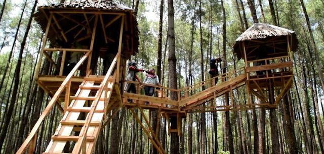 Berwisata Akhir Pekan di Hutan Pinus