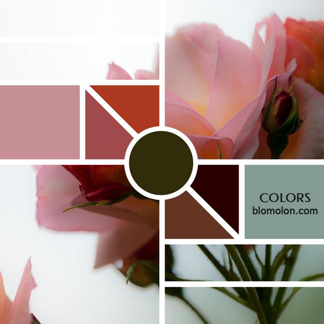 variedad_en_color_moodboards_10