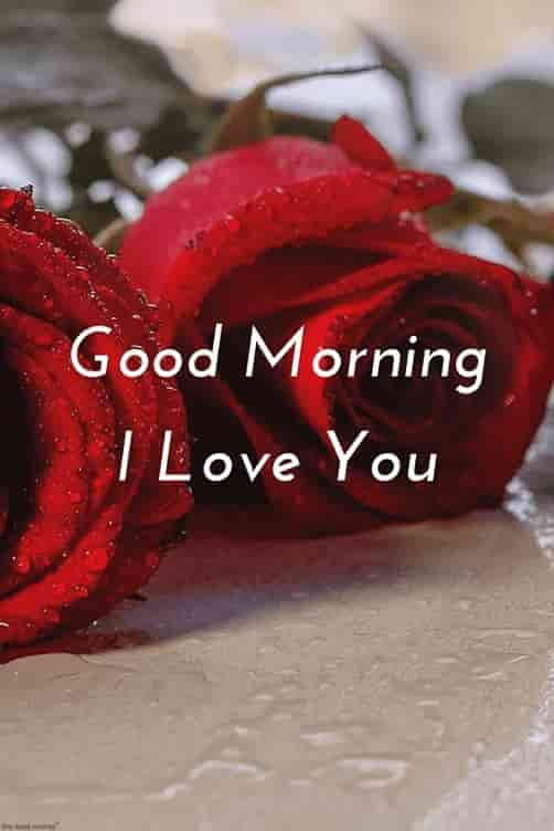 good morning hd romantic pics with red rose i love you
