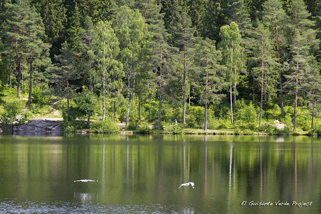 Detalle de Steinbruvann, Lillomarka - Oslo por El Guisante Verde Project