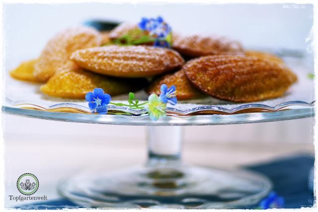Gartenblog Topfgartenwelt Buchtipp Französisch Backen mit Rezept für Madeleines: Aurelie Bastian