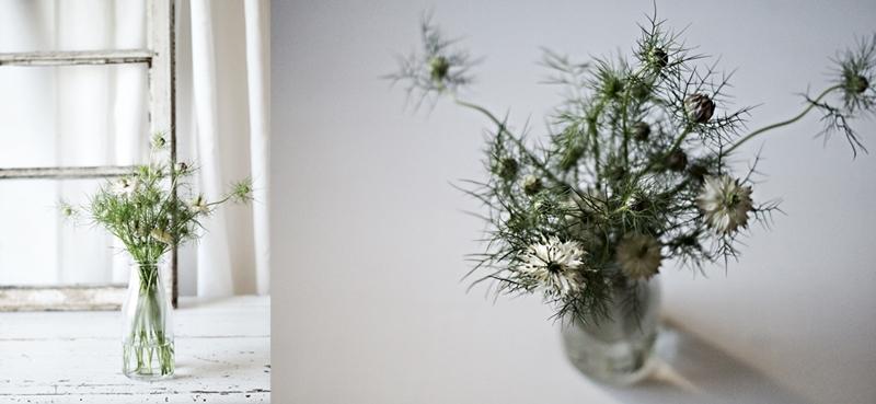 Blog + Fotografie by it's me! - Collage von von Jungfer im Grünen Nigella in einer Milchflasche