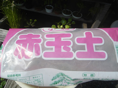 熱帯スイレン(睡蓮) 赤玉土