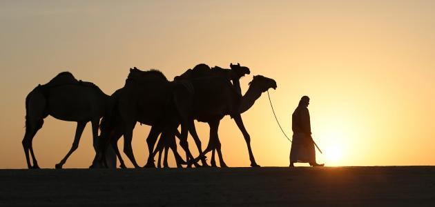 الهجرة إلي يثرب - الشيخ خالد الراشد