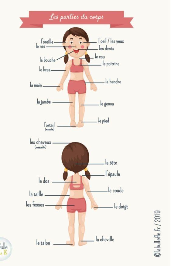 Części ciała - słownictwo 13 - Francuski przy kawie