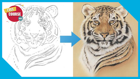Draw a Tiger using just 6 Pastel Pencils 100% Free Course
