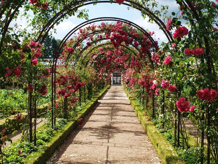 Den smukke rosengang midt ned igennem Fredensborg Slots køkkenhaven