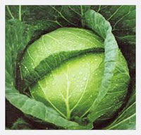 7 Benefits of Vegetables Cabbage