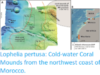 https://sciencythoughts.blogspot.com/2019/03/lophelia-pertusa-cold-water-coral.html