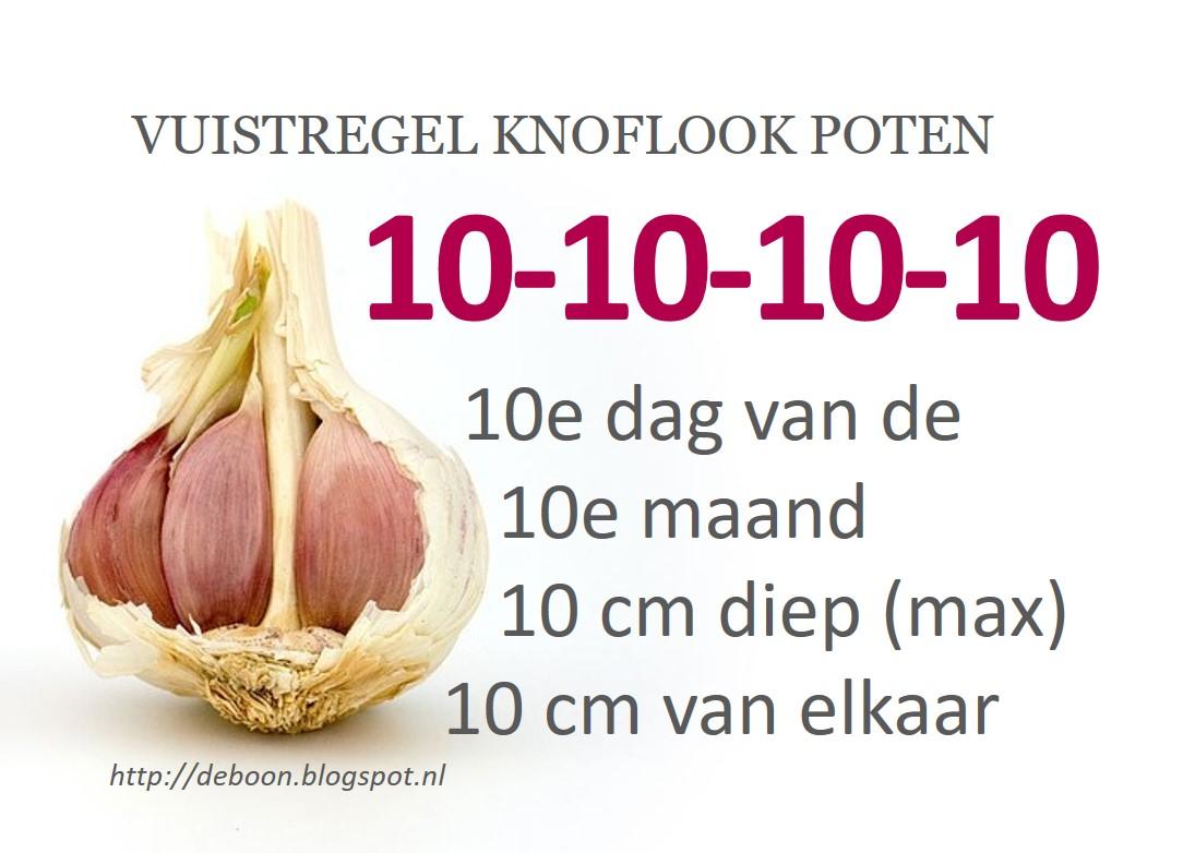 tips knoflook poten moestuin najaar
