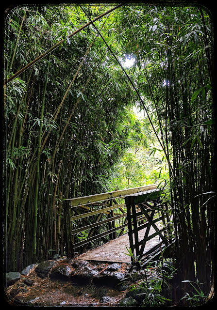 Bridge in Bamboo Forest on the Pipiwai Trail Maui