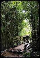 Bridge in Bamboo Forest on the Pipiwai Trail Maui