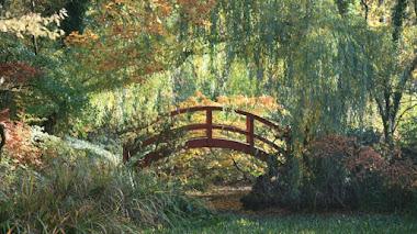 Foto del día: sauce, puente y no es el jardín de Monet en Giverny