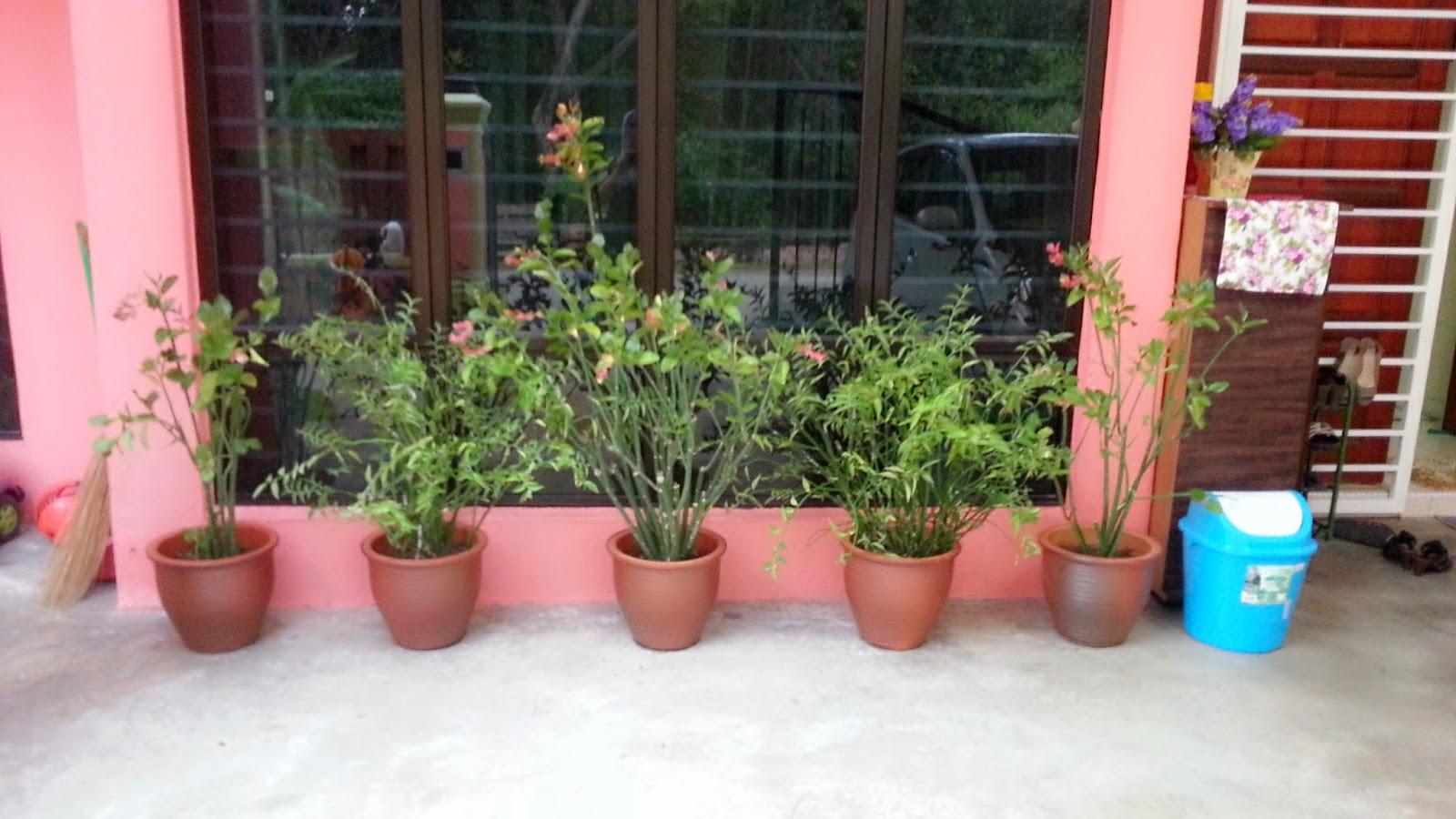 77 Pokok Bunga Hiasan Depan Rumah
